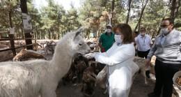 Gaziantep Hayvanat Bahçesi yeniden açılışı için gün sayıyor
