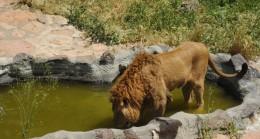 Hayvanat bahçesi sakinleri ziyaretçilerini özledi