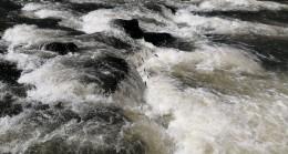 İnci kefali balığını muhteşem göçü devam ediyor