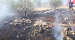 Orman yangınında badem ağaçları zarar gördü