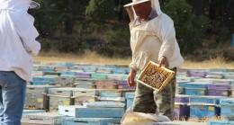 Kuraklık çam balını vurdu, arılar açlıkla karşı karşıya