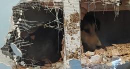 Apartman boşluğuna düşen köpeği duvarı delerek kurtardılar