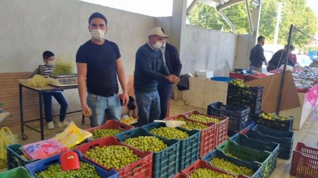 Yüksek fiyat salamura zeytin yapımını yaygınlaştırdı