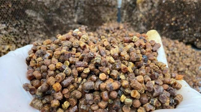 Afyonkarahisar Taşoluk'ta vitamin deposu 'arı ekmeği' üretimi başladı