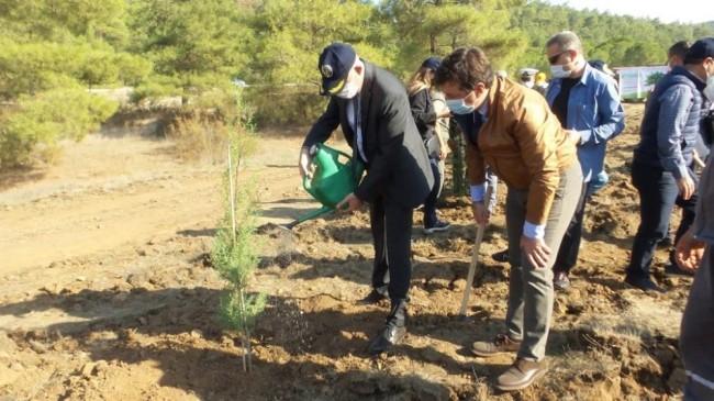 Marmaris'te 1000 çam fidanı toprakla buluştu