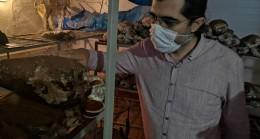 Yerli Reishi mantarı üretilerek satışa sunuldu