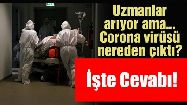 Corona virüsünün kökenini araştıran DSÖ'den Cevap