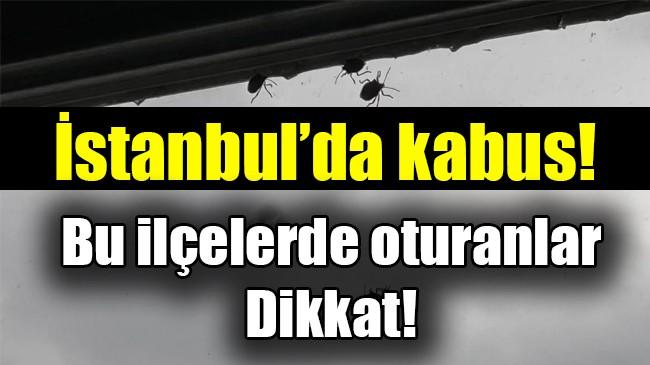 İstanbul'da kabus! Bu ilçelerde oturanlar dikkat